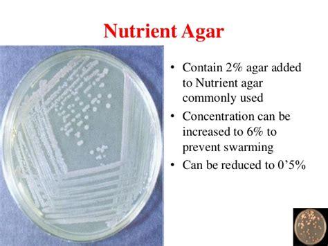 Media Mikroba Nutrient Agar Biolife bacterial culture media