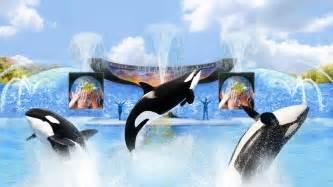 Sea World Seaworld Orlando To Debut New Shamu Killer Whale Show Quot One