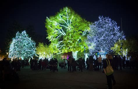 detroit zoo winter lights fancy detroit zoo lights plan home gallery image and