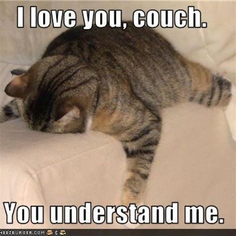 love my sofa pin by rachelle evans on meme chuckles pinterest couch