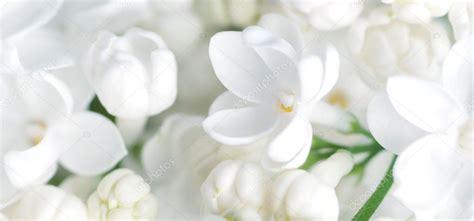 immagini di fiori bianchi sfondo fiori bianchi foto stock 169 amuzica 31481325