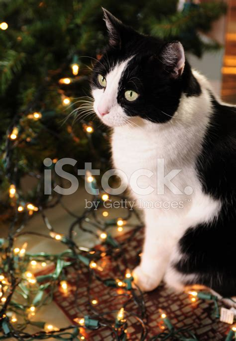 cute cat and christmas lights stock photos freeimages com