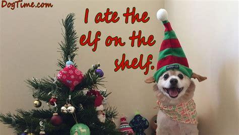 dog christmas cards  share   friends  family dogtime