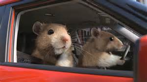Kia Hamsters Return Of The Kia Hamsters Thedetroitbureau