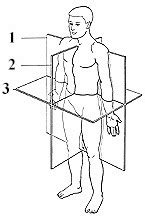 Anatomical Planes And Sections Worksheet