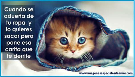 imagenes con frases bonitas de gatitos gatos tiernos con frases bonitas imagenes especiales de amor