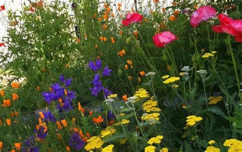 Garden Flowers List Cottage Garden Plants For American Gardens The Garden Glove