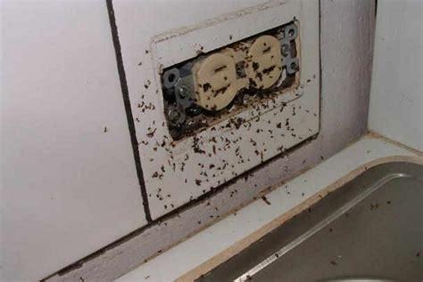 fourmis dans la maison nid fourmis maison ventana