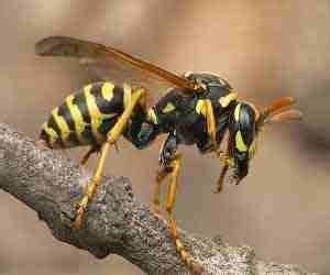 sognare insetti volanti vespe nei sogni cosa significa sognare vespe guida sogni