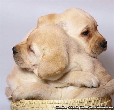 hug puppy just give me a hug