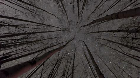 stars  trees stock video footage
