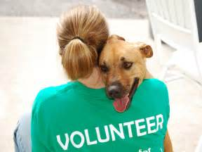 volunteer positions 171 humane society of catawba county