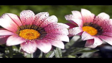 imagenes full hd para descargar gratis descargar fondos de pantalla pack 1 flores youtube