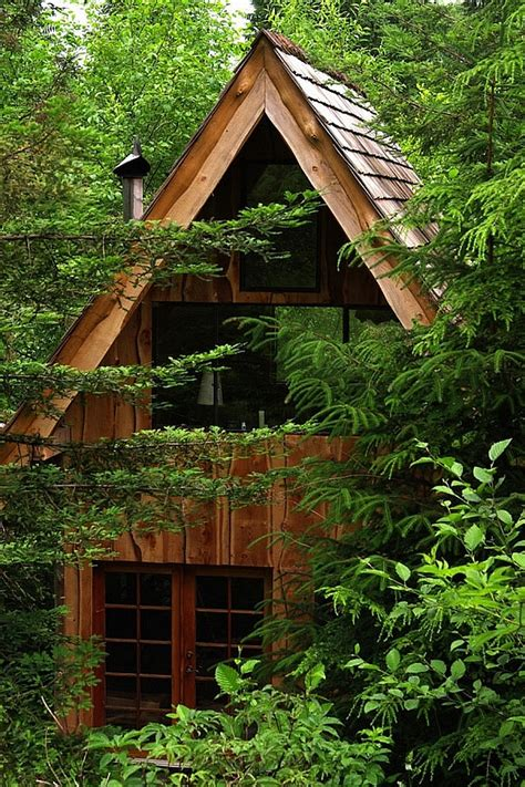 amazing forest house  built