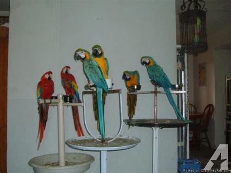 ten pair of birds for sale for sale in north bend oregon