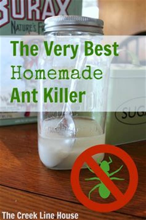 1000 ideas about sugar ant killers on ant