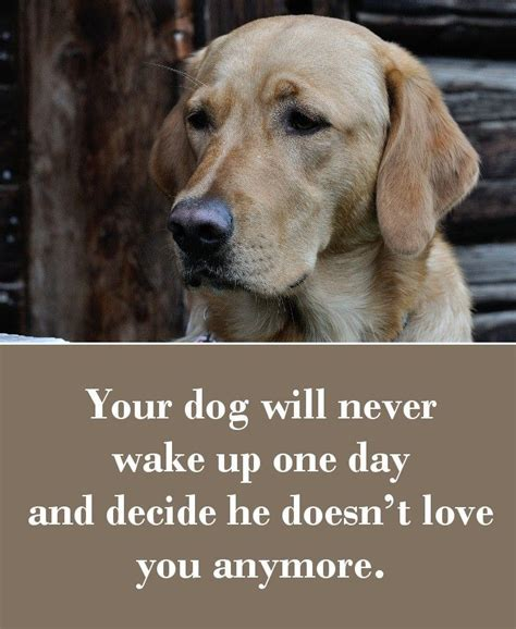 puppy sayings best 25 quotes ideas on puppy quotes pet