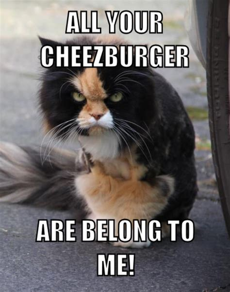 Cheezburger Meme - all your cheezburger meme guy