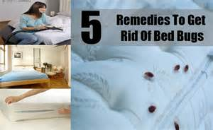home remedies to get rid of bed bugs permanently how to get rid of bed bugs yourself fast home remedies for