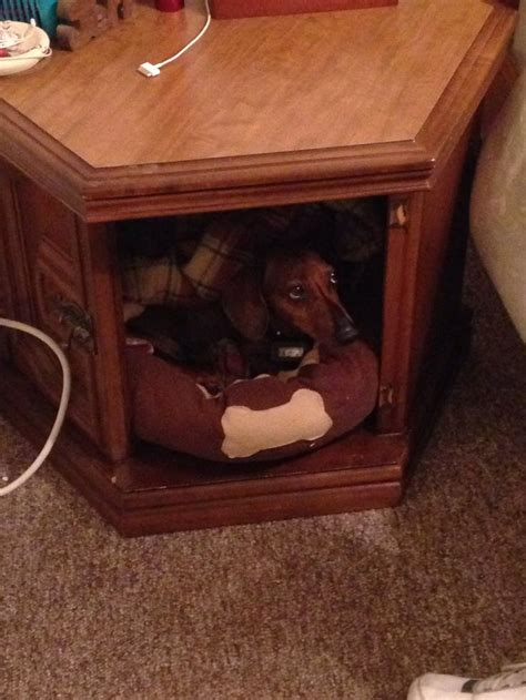 nightstand dog bed recycled end table as dog bed nightstand diy pinterest
