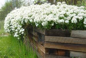 white flowers in wooden planter picture free photograph