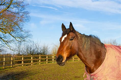 Field Mats Horses For Sale by In Field Wearing Rug By Fizzy Image