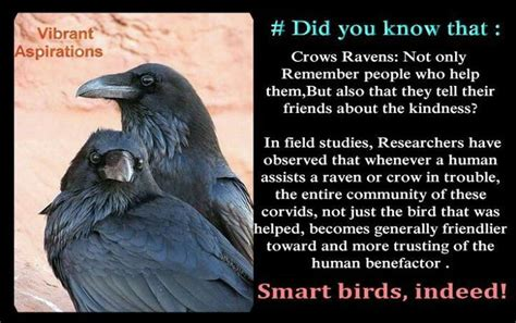 about raven interesting facts do u know this pinterest