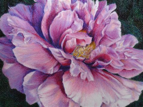 caryn coville colored pencil drawing pencil drawings