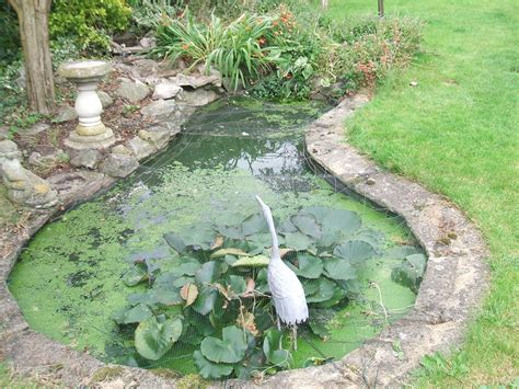 backyard gardening blog garden pond design the garden pond blog