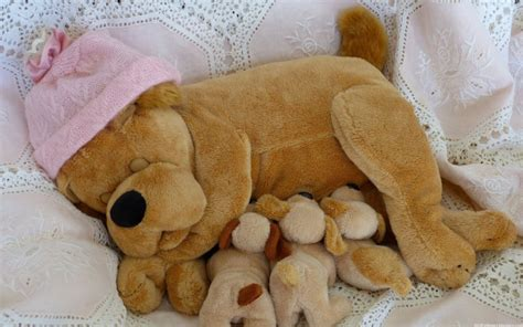 pseudopregnancy in dogs how to confirm a s pregnancy avoid pseudopregnancy