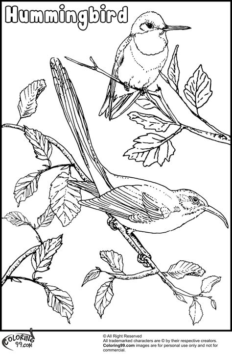 printable coloring pages hummingbirds hummingbird coloring pages team colors