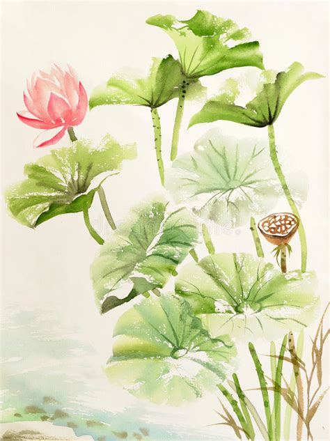 Lotus Leaf Original 30pcs watercolor painting of lotus leaves and flower stock illustration illustration of lotus