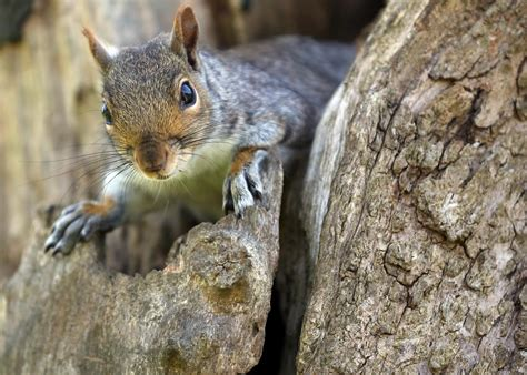 are squirrels good pets instagram squirrels make it seem