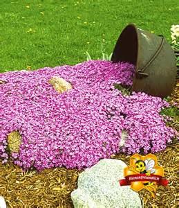 teppich phlox teppichphlox emerald pink 1a pflanzen kaufen baldur garten