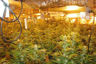 hydroponic marijuana grow guide