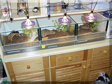 beleuchtung terrarium 20 terrarium beleuchtung bilder t5 beleuchtung und