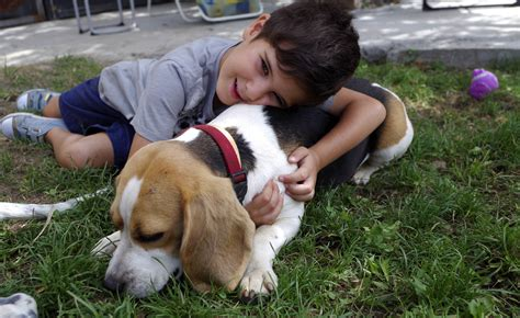 imagenes de niños jugando con animales objetivo beagle delgado por un perro en forma y sano