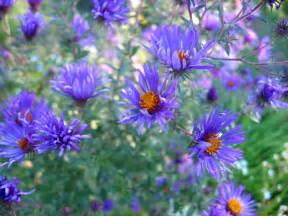 Beautiful butterfly garden flowers rberrylaw beautiful butterfly garden flowers