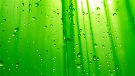 cool green backgrounds wallpaper