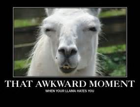 Happy llama sad llama mad llamafunny shtuff awkward moments funny