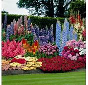 Perennials For Zone 7 The Home Pinterest MEMES
