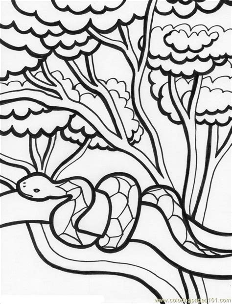 Coloring Pages Of Birds In The Rainforest | coloring pages of rainforest animals bestofcoloring com