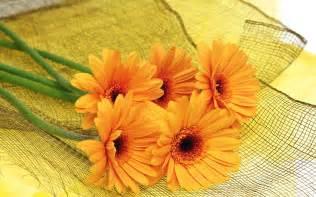 boutineer flowers orange flower hd wallpapers