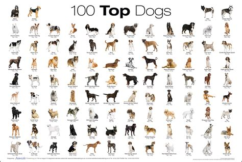 dogs types top 100 breed poster