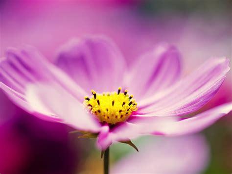 imagenes flores moradas flores moradas fondo de pantalla 1600x1200 id 614