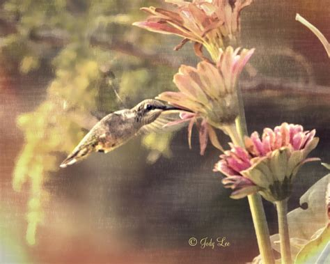 Hummingbird Home Decor Hummingbird Photograph Hummingbird Home Decor Pastel