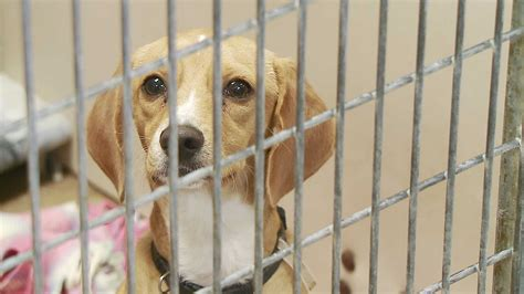adoption dogs frugal friday august 17 kfor