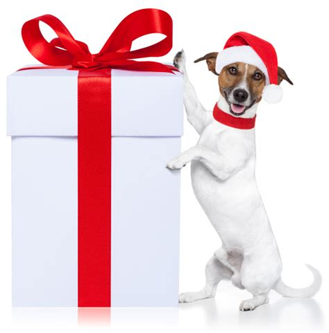 holiday gift guide for dogs
