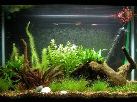 kumpulan  membuat hiasan aquarium  plastik murah