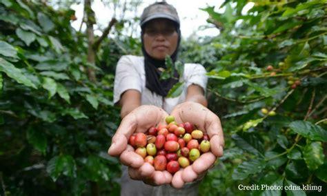 Minyak Kutus Kutus Bandung ternyata quot leluhur quot nya kopi indonesia masih eksis sai
